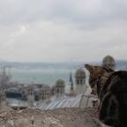 Week 15: First Impressions of Turkey